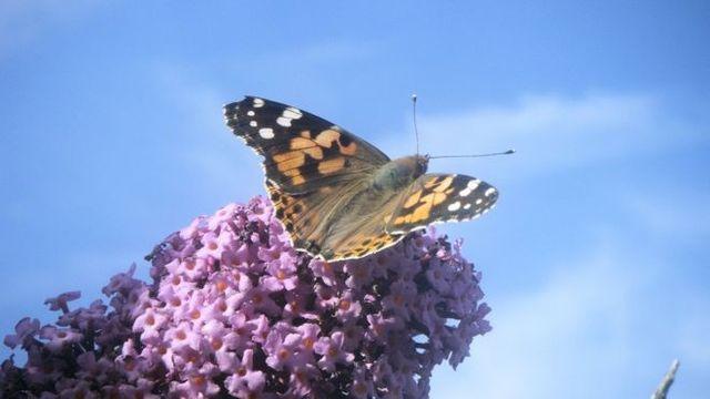 每年有3.5兆昆虫迁移 飞越英国上空