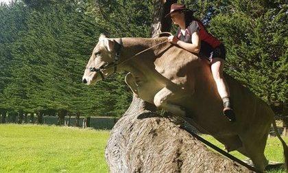 美少女是骑牛高手 能跳过1.4米障碍物