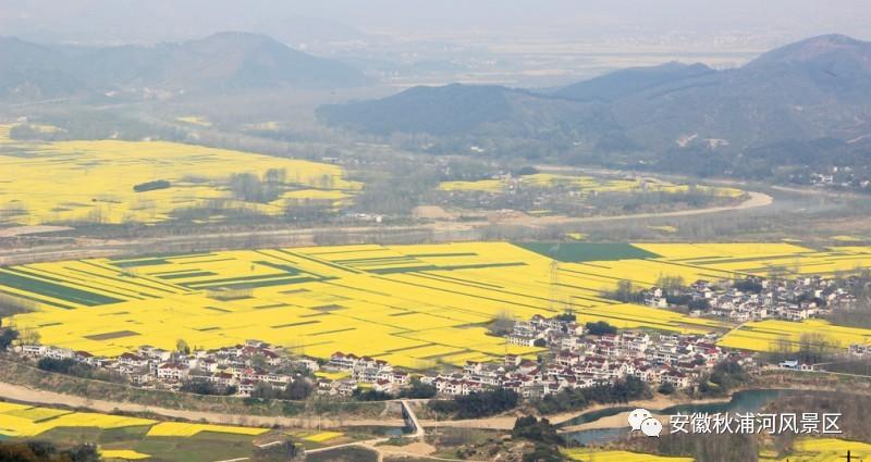 这个春天我们去秋浦河畔赏油菜花吧!