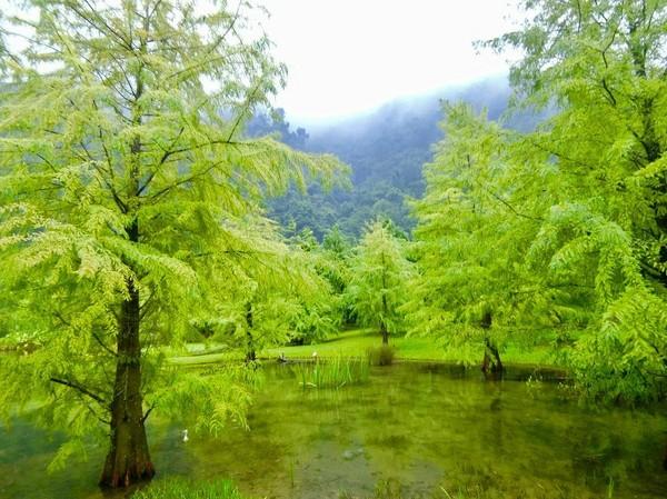 ▲云水度假森林。