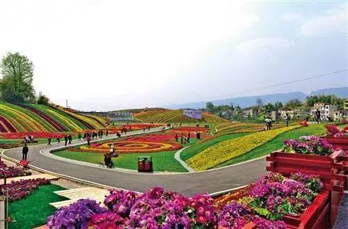 """阜阳将建10个花卉特色小镇,打造""""新花都全域旅游""""!"""